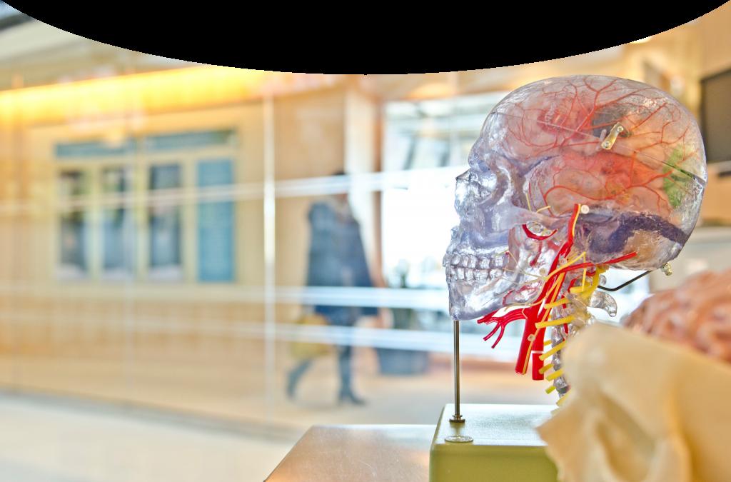 Die Eisai GesmbH neurologie