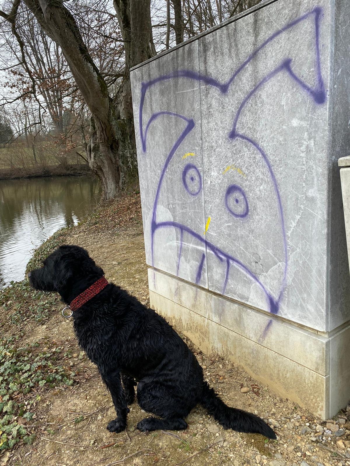 Hund am Wasser